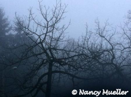 FoggyMorningGreenlakeSeattle (450 x 336)