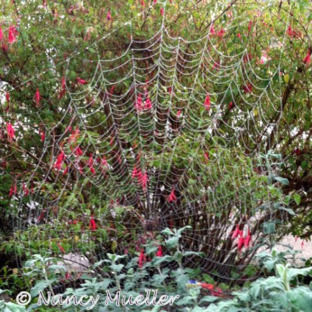 Seattle Spiderweb Walk