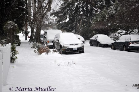 Snowy Seattle Neighborhood Street