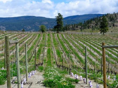 Okanagan B.C. Wine Country