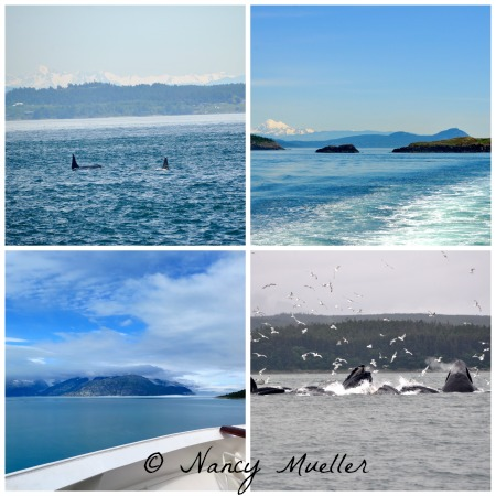 Whales watching in the San Juans and Glacier Bay