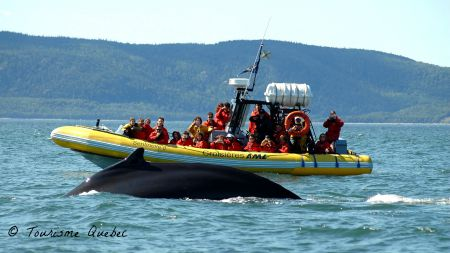 Whale watching Quebec