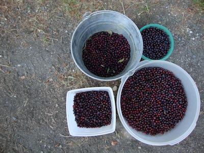 Huckleberry Haul