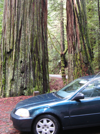 The car I've driving for HittheRoad.ca in the Redwood Forest