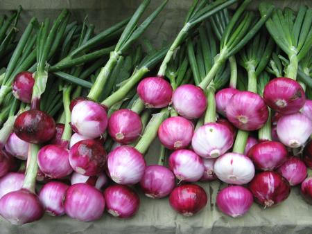 Red onions, Portland Saturday Farmers Market, Portland, OR