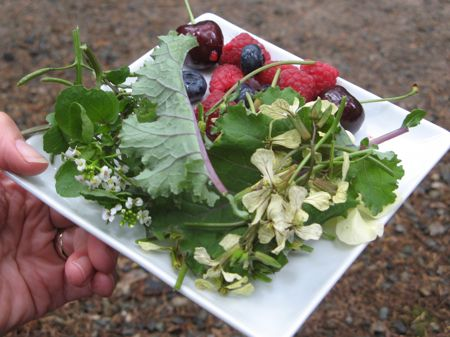 Wild greens, fruit on Swallow Tail Wild Edibles Tour