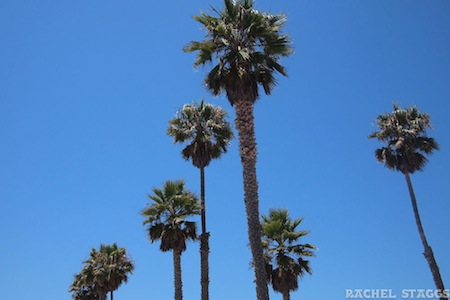 venice beach los angeles california palm trees