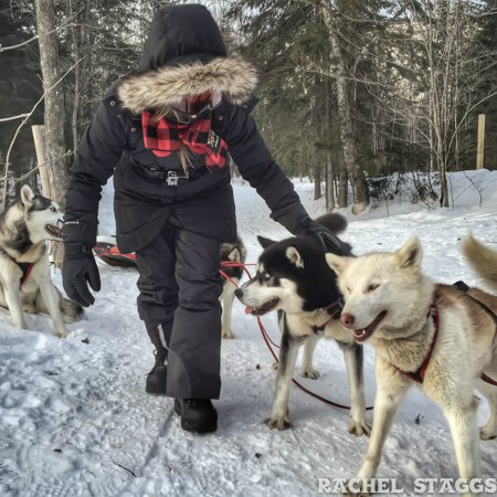 dogsledding in saguenay