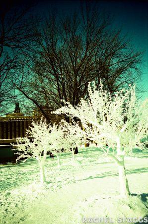 quebec city ice sculpture