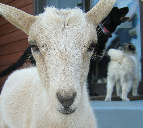 Wanderlush Diary: Goat Bubbles in the Ghetto