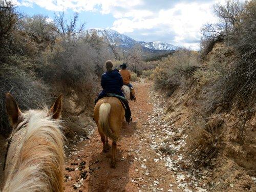 Canyon Trails Ranch horseback ride