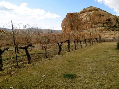 Sutcliffe Vineyards in McElmo Canyon