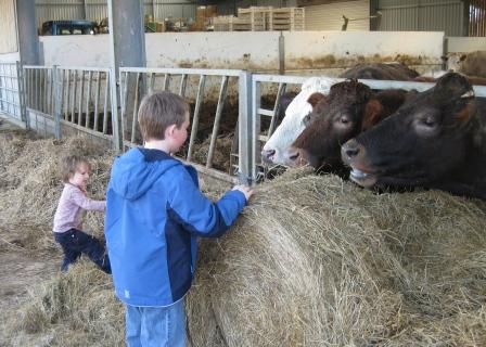 Bren-Charlie-Cows