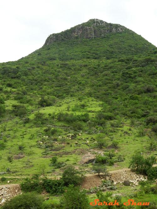 Near Teotitlan del Valle in Oaxaca, Mexico