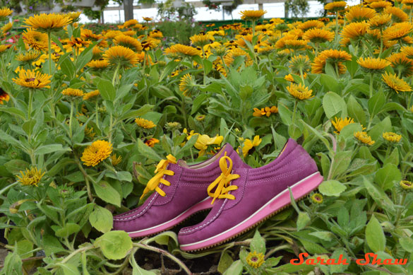 ECCO Mind shoes with black eyed susans