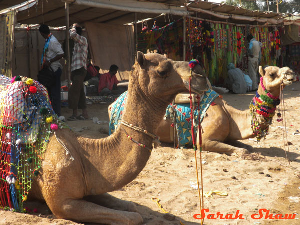 A stall sells decorations for the stars of the Pushkar Camel Fair in India