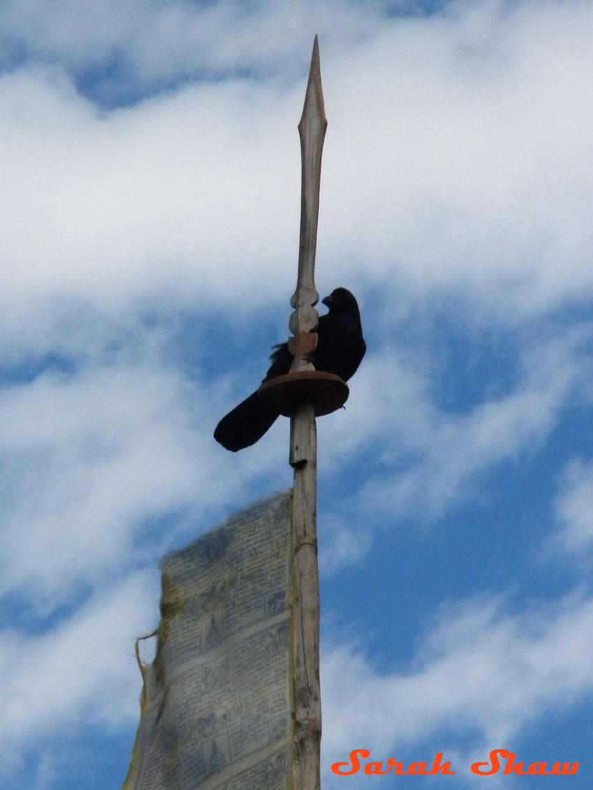 Crow atop a white prayer flag