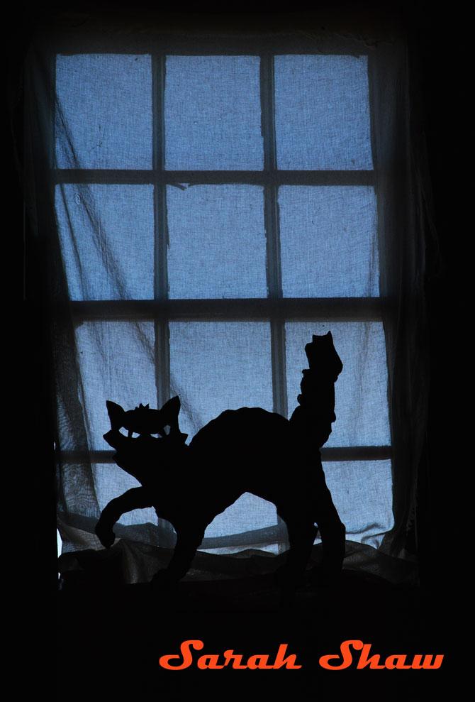 Black cat image in a window