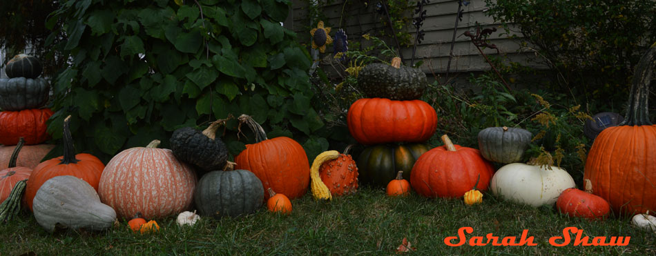 Squash, gourds and pumpkins for Halloween