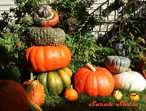 Heirloom Pumpkin Towers