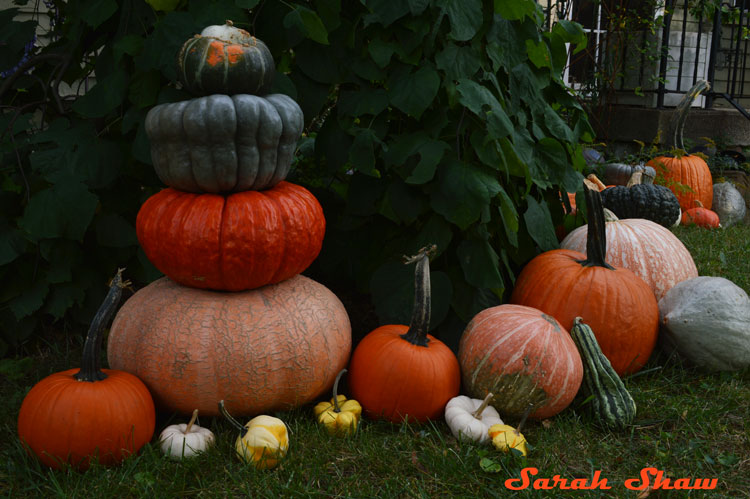 Heirloom Pumpkin tower for Halloween Decorations