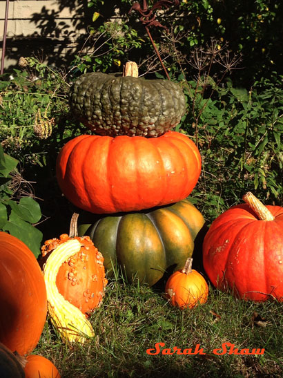 Stack of Heirloom Pumpkins