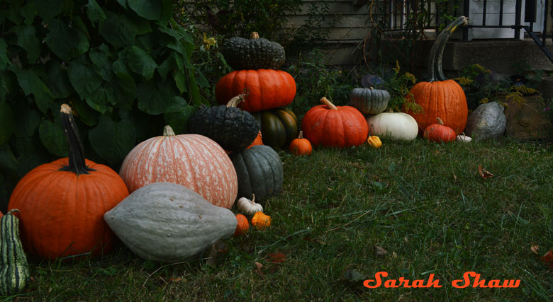 Heirloom pumpkins, squash and gourds