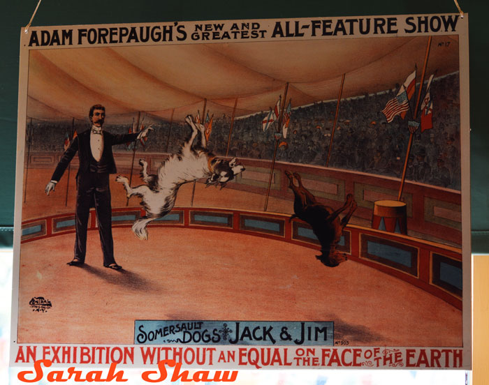 Somersault Dogs Show