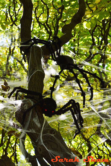 Spiders and webs in trees
