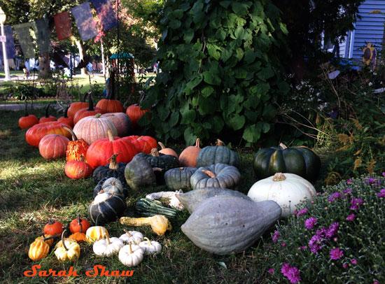 Heirloom pumpkins, squash and gourds
