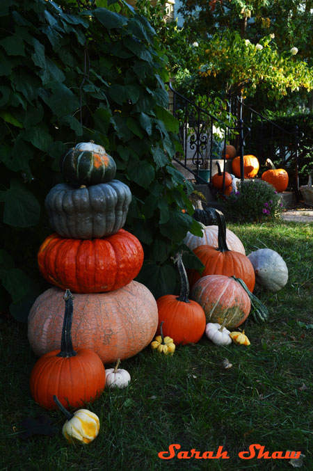 Heirloom pumpkins are stacked into a tower