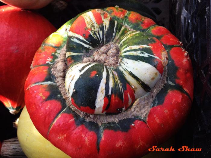 Turks Turban Squash