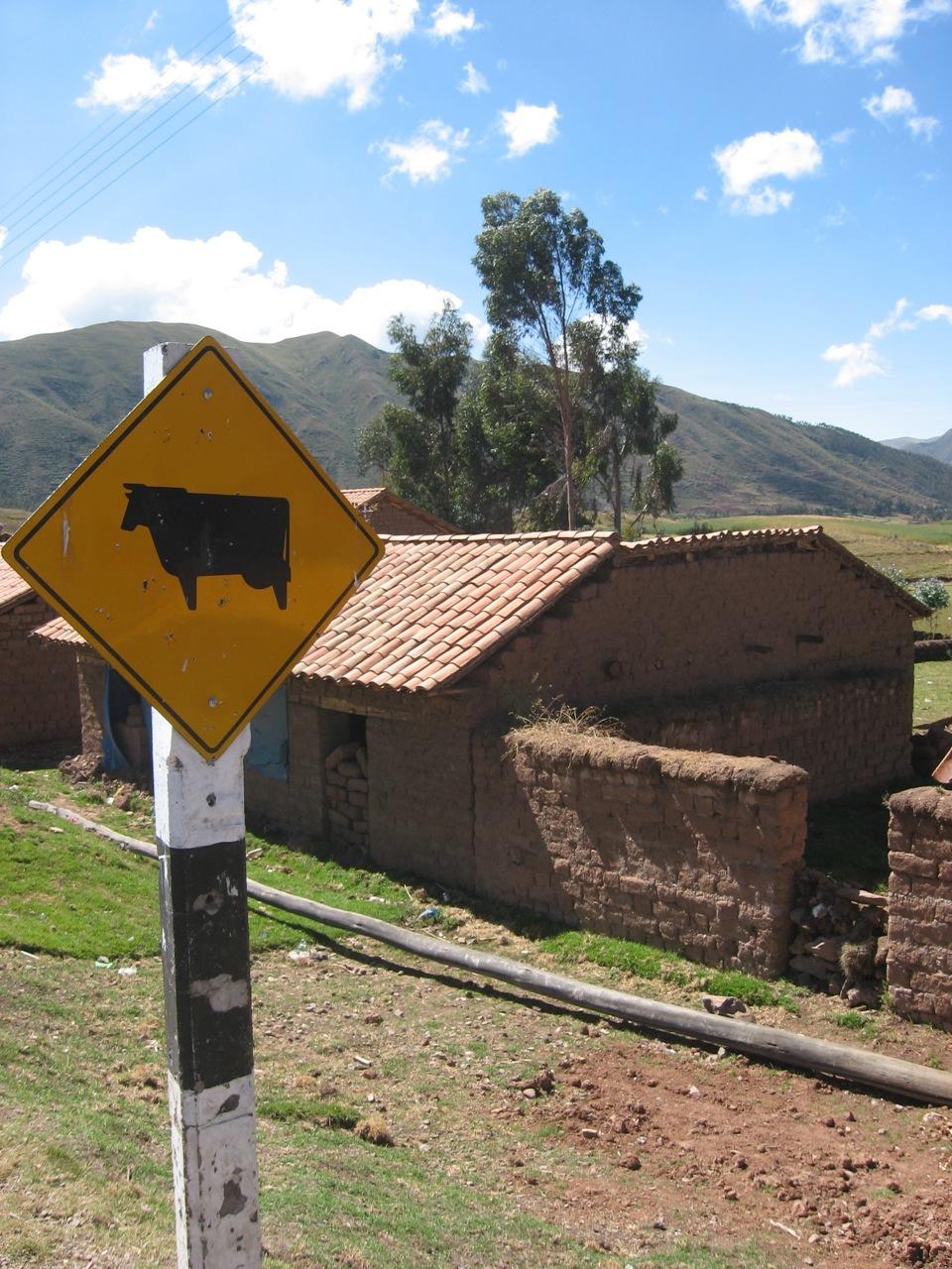 CattleCrossing