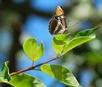 Mariposa-Butterfly
