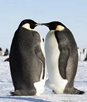 7 Must-See Antarctic Animals