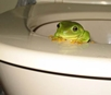 The-Tale-of-the-Toilet-Frog