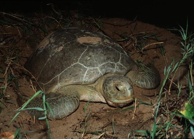 turtle-at-night