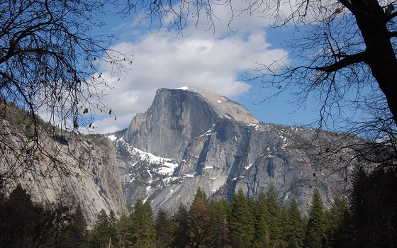 half dome through trees