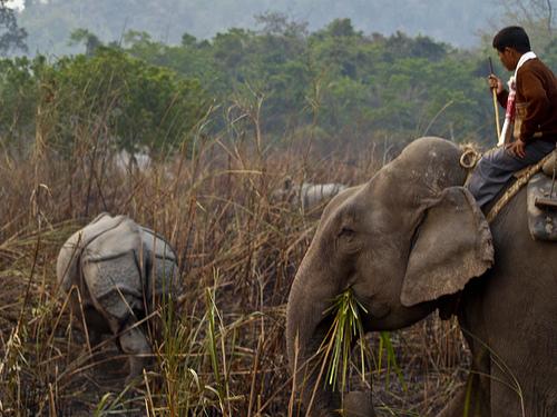 Elephant Safari Kaziranga