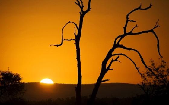 African-Sunrise