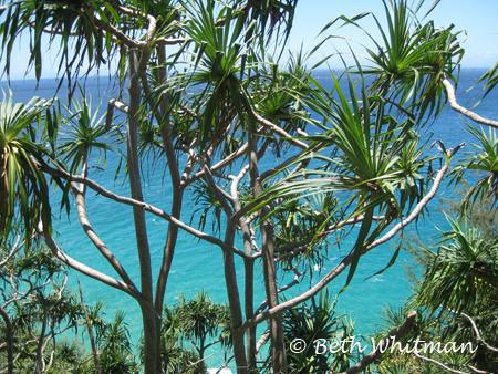 Kauai Trees