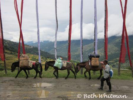 Horses with Prayer Flags Eastern Bhutan