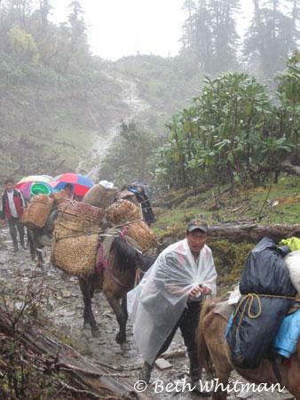 Eastern Bhutan trek with horses to Merak & Sakten
