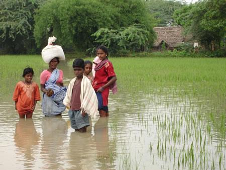 Flooded Field in Karunganni