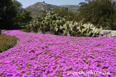 Rancho la Puerta – Photo of the Day
