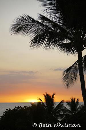 Palm Tree Sunset on Kohala Coast Big Island