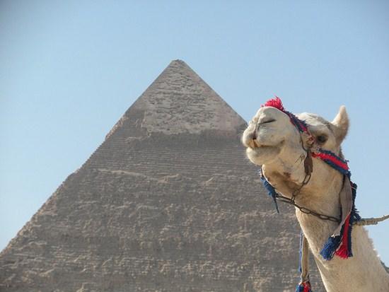 Egyptian Pyramid and Camel