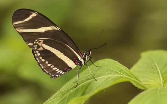 mariposa_butterfly