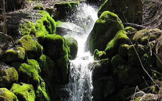 Moss-on-Rocks