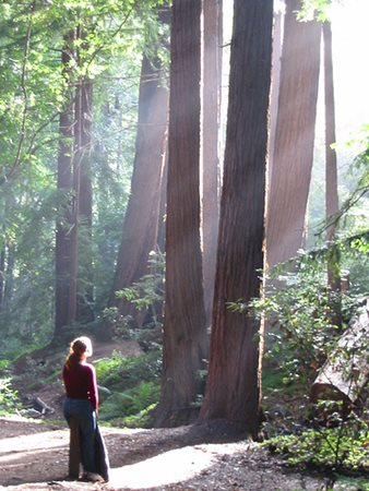 Woman Looking Up At Redwoods
